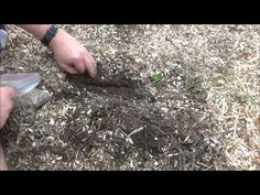 How Do I Plant In A Back To Eden Garden - L2Survive with Thatnub - YouTube