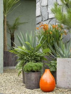 love the orange vessel to pick up the color of the orange blooms in the back pot