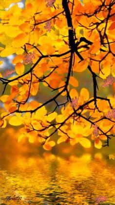 Autumn gif