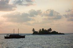 #Plongée aux #Maldives : les #atolls du centre version croisière bio ! #voyage #trip #ile