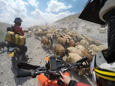 Ramon Marcelis encounters an unusual roadblock while traveling through Iran. Gopro Action, Wild Photography, Close Encounters, Camera Accessories, In This Moment, World, Iran, Animals, Shots