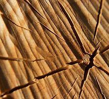 Splitting Wood by Sophie Watson Splitting Wood, Art Work, Crafts, Photography, Artwork, Work Of Art, Manualidades, Photograph, Fotografie