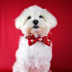 Your place to buy and sell all things handmade Dog Christmas Gifts, Father Christmas, Bow Tie Collar, Dog Accessories, This Is Us, Your Dog, Collars, Pup, Vibrant