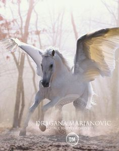 ⋆*¸.•*♥ Once Upon A Time ♥*•.¸*⋆ there lived the White Pegasus