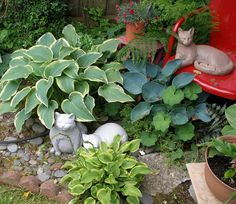 Don't fret if you have too much shade. Hostas are amazingly easy care, splashy, colorful and I love them!