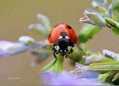 Macro photo by Chris Logothetis Nikon D5500, Macro Shots, Small World, Macro Photography, Image