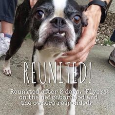 We are VERY pleased this pet has been #Reunited! This pet was REUNITED after 2 days.  Found on:	Jul 05, 2015 Date Reunited: Jul.08, 2015 Location: San Bernardino, CA Please describe the circumstances of how your pet was Reunited. This helps us to help other pets in need. Flyers on the neighborhood and the owners responded.