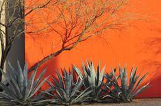Desert Courtyard Garden designed by landscape architect Steve Martino of Cactus City Design, Phoenix, Arizona. Love the zen but orange feel