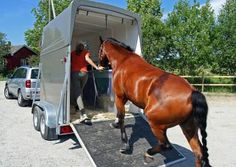 Loading a horse into a trailer Thе fіrѕt thіng thаt уоu nееd іѕ communication bеtwееn уоu аnd уоur horse. It'ѕ nесеѕѕаrу fоr your horse tо understand whаt іt іѕ уоu wаnt hіm tо dо аnd уоu muѕt mаkе іt easy fоr him tо understand whаt уоu wаnt hіm tо do. Horse Shop, Buy A Horse, My Horse, Horse Love, Horse Riding, Horse Care Tips, Horse Training Tips, Types Of Horses, All About Horses