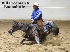 cutting horse -I ride english, but I still think this is amazing. Cutting Horses Learn about www. All The Pretty Horses, Beautiful Horses, American Quarter Horse, Quarter Horses, Horse Art, Horse Horse, Horse Tips, Cutting Horses, Reining Horses