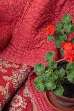 Red quilts and geraniums I See Red, Red Geraniums, White Cottage, Cottage Style, Red Rooms, Red Apple, Red Poppies, Shades Of Red, Little Red