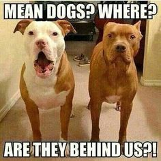 Mean dogs?  Where?  Are they behind us?!