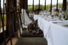The resident cat | Mudbrick Vineyard & Restaurant, Waiheke Island