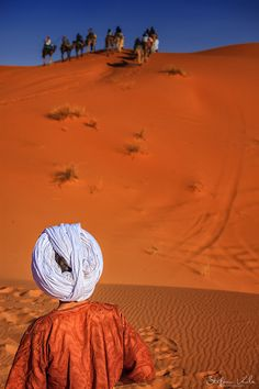 Camels in the Sahara, Morocco