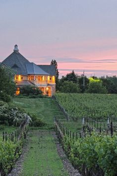 14 Of The Best Wineries In The Niagara Region Niagara Region, Wine Sale, Wine And Spirits, Travel Bugs, Canada Travel, Vacation Trips, Niagara Falls, Places To Go, Around The Worlds