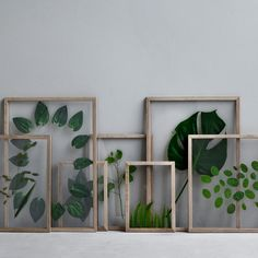 This frame by Moebe consists of two pieces of acrylic glass, four pieces of oak and a rubber band. The rubber band both holds the frame together and serves for hanging the frame on your wall. Design Shop, Cadre Photo Mural, Framed Leaves, Door Stickers, Printed Cushions, Wedding Art, Wooden Shelves, Art And Architecture, Scandinavian Design