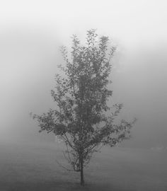 Foggy morning trees black and white photograph http://schererbeautifulliving.blogspot.com/