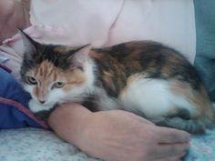 Roxy endorses this Kudose recipe for cats using tasty tuna.
