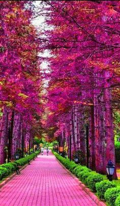 Beautiful tree lined street. Beautiful Nature Wallpaper, Beautiful Landscapes, Beautiful Gardens, Pink Trees, Colorful Trees, Landscape Photography, Nature Photography, Beautiful Places, Beautiful Pictures