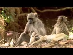 Discovery Channel | Animal Planet 2015 | Wild Life Documentary | National Geographic Wildlife #5