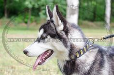 Exclusively Designed #Leather #Dog #Collar with Plates $34.90