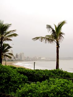 Durban, love the palm trees Clifton Beach, All About Africa, City By The Sea, Kwazulu Natal, Pretoria, Amazing Spaces, My Land, Rest Of The World, Civil Engineering
