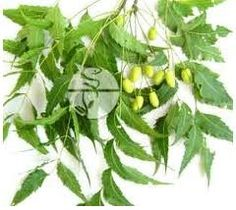 The Neem tree is very well known for its medical properties and every part of the plant is used in ayurvedic medicines, the bark and the leaves being in breater use. Description from indianayurvedaonline.blogspot.com. I searched for this on bing.com/images
