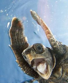 Turtle Close-up from National Geographic