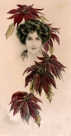 Post card art, Poinsettia - 1910 - J Knowles Hare