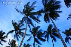 Si vous souhaitez un endroit authentique, sauvage et calme pour pratiquer la plongée sur de superbes sites... Cabilao aux Philippines est fait pour vous !!!