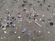 「砂浜に星空が」に関するYahoo!検索(リアルタイム)検索結果。Yahoo!検索(リアルタイム)は、今発信されたリアルタイム情報を検索できたり、テレビ放映中番組に関するTwitter,Facebook上での反響などもチェックできる検索サービスです。