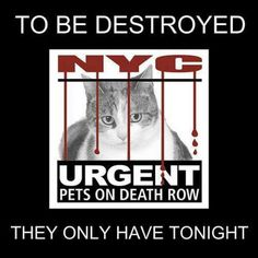 Tonight's List is Posted. There are 16 Cats/Kittens in Danger - - Info  Click for info & Current Status: http://nyccats.urgentpodr.org/to-be-destroyed/