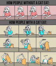 猫がいる生活といない生活