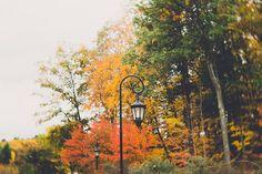 lantern photograph, fall foliage, wellesley college lantern, home wall art, nature photo, New England and Massachusetts art, lensbaby