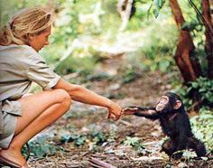 Jane Goodall, a British primatologist, ethologist, anthropologist, and UN Messenger of Peace.[ Today, the mission of her Jane Goodall Institute is to advance the power of individuals to take informed and compassionate action to improve the environment for all living things. The Institute is a global leader in the effort to protect chimpanzees and their habitats.