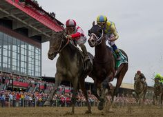 Apparently the Apollo curse doesn't apply to the GI Preakness S.  While no horse has won the GI Kentucky Derby absent a start as a 2-year-old since Apollo some 135 years ago, Klaravich Stable and William …