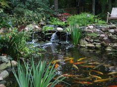 Wie Sie einen Wassergarten anlegen – Tipps für Teich und Pflanzen