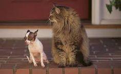 Výsledek obrázku pro kočky a psy