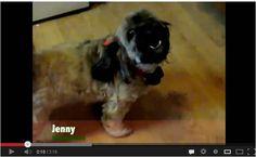 "Animals of YouTube singing ""Jingle Bells."""