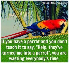 Help Im a parrot