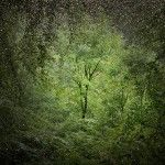 Ellie Davies Creates Forest Landscapes Illuminated with Fields of Stars and Smoke - Low quality thumbnail, but click through! These are so worth it.