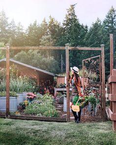 Come experience a luxury farm stay at Evergreen Acres Farm on Bainbridge Island, Washington. See the gardens, animals, and more. Veg Garden, Vegetable Garden Design, Garden Fencing, Farm Gardens, Outdoor Gardens, Farmhouse Garden, Farm Stay, Farm Life, Farm House