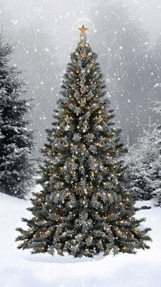 Beautiful Christmas tree in the snow Christmas Scenes, Noel Christmas, Merry Little Christmas, Country Christmas, Winter Christmas, Christmas Lights, Vintage Christmas, Christmas Decorations, Outdoor Christmas