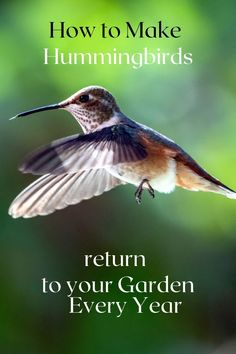 Follow these tips to create a Hummingbird garden that will bring them hummingbirds in year after year! Hummingbird Garden, How To Attract Hummingbirds, The Fool, Attraction, Bring It On