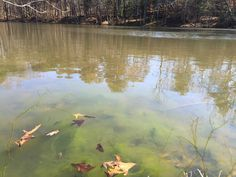 1000 images about algae aquatic weeds on pinterest for Farm pond maintenance