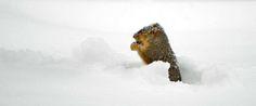 Voglia di #neve, soffice e silenziosa? 10 #idee per un inizio #anno con i fiocchi: http://blog.viaggiverdi.it/2014/12/itinerari-neve/ #ecoturismo