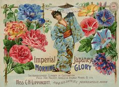 Miss C. H. Lippincott. Nursery and Seed Catalog Image Gallery/National Agricultural Library