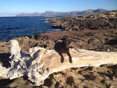 Mallorca Finca Real, Spaziergang am Meer