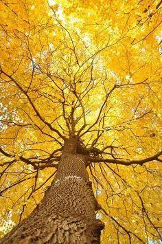 Amarillo: - El amarillo representa la luz del sol. Simboliza también la energía y la felicidad. - El amarillo estimula la actividad mental y genera energía a nivel muscular. - En heráldica el amarillo simboliza honor y lealtad. - El amarillo más pálido puede ser un color lúgubre que se relaciona con la enfermedad o los celos. Sin embargo, el tono claro representa originalidad e inteligencia.