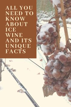Presenting the Sweet Nectar by Wine Gods. Frozen Grapes, Chenin Blanc, Unique Facts, Pinot Gris, Sweet Wine, Woman Wine, Red Grapes, Wine Festival, Fine Wine